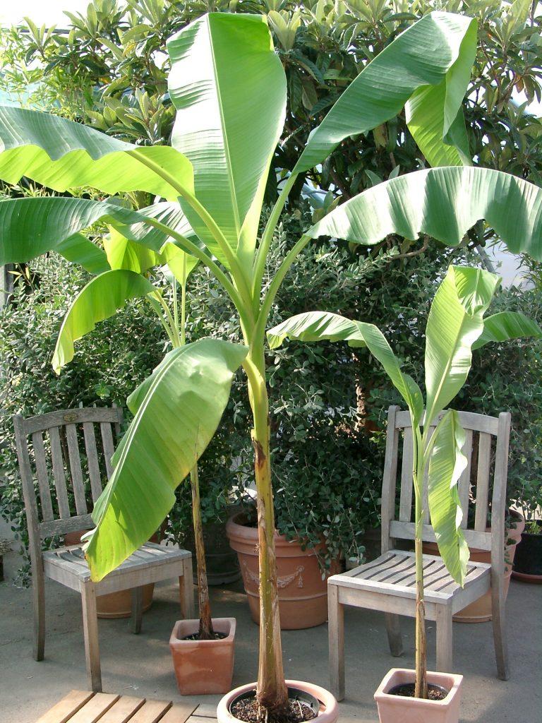 Welche Pflanzen eignen sich für sonnige, heisse Süd Terrassen und ...