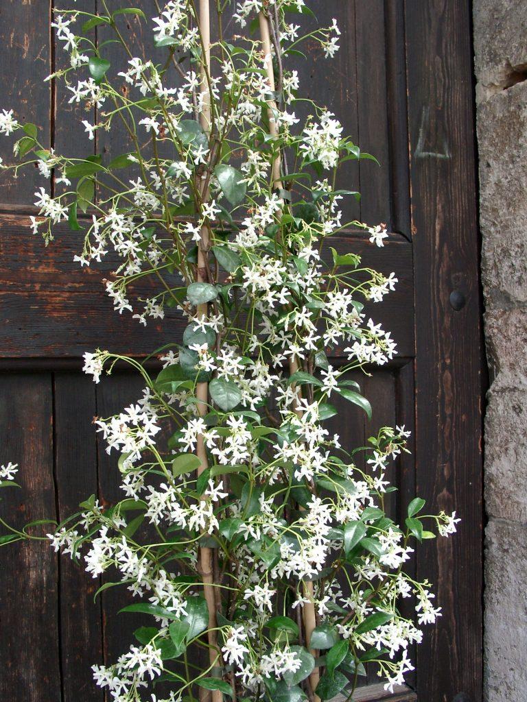Wunderschöne Kübelpflanzen für schattige Plätze auf Balkon und ...